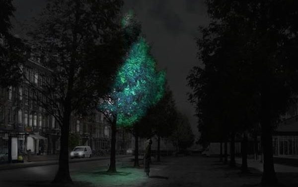 Glow-In-The-Dark Trees Could Replace Street Lights