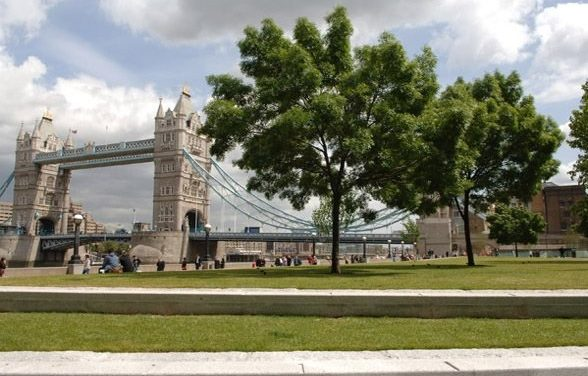 The Future of London's Trees – exploring opportunities, overcoming barriers