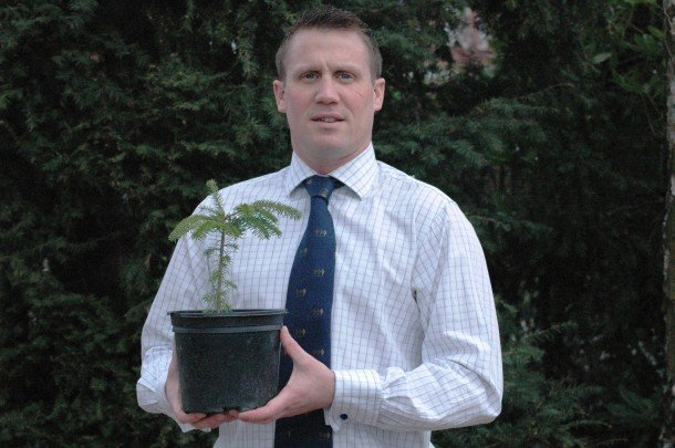 conifers for colleges