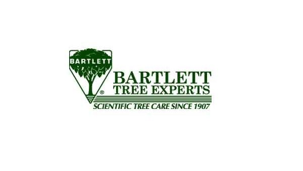 Phytophthora root rots – Bartlett Tree Experts