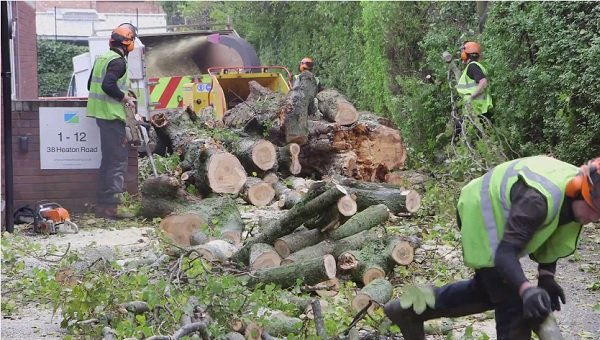 VIDEO: Arboriculture – The Greenfingers Way