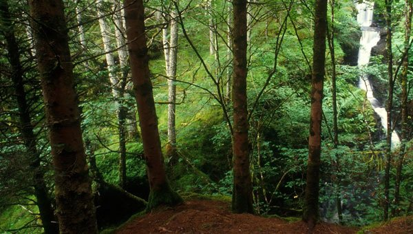 Figures reveal popularity of Scotland's national forests