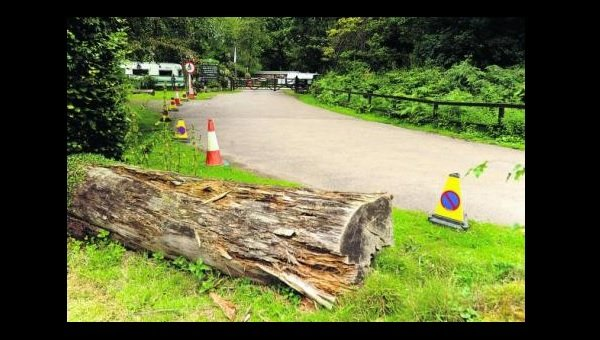 Anger as new wood barriers at Savernake cause picnic site chaos