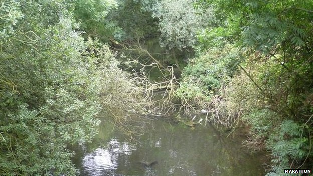 Trees cut down in Maidenhead Waterways project