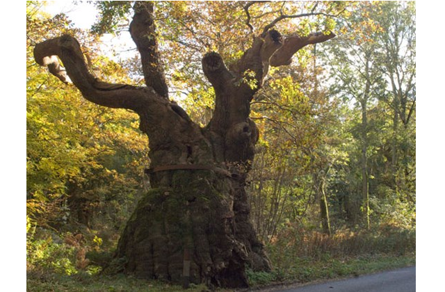 England's Tree of the Year shortlist