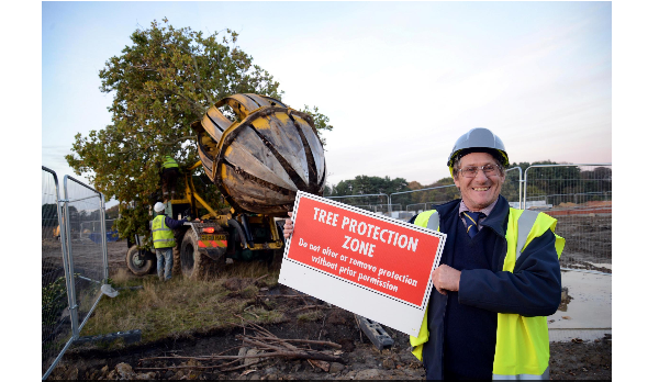 Oak trees saved from building site