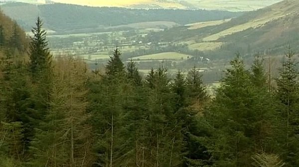 Killer disease prompts larch tree felling in Cumbria