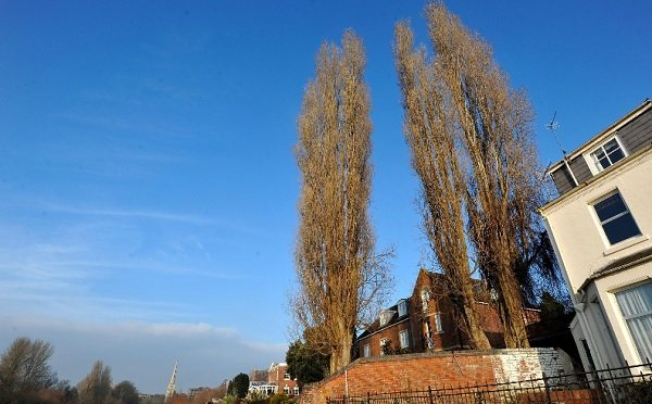 Three spectacular trees to be chopped down in Worcester
