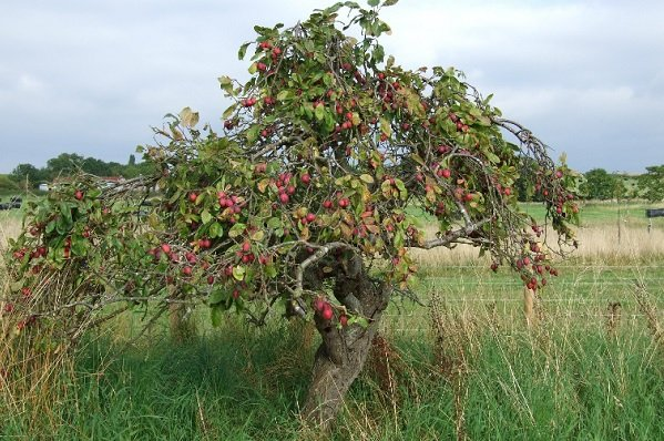 """100 new plum trees to extend """"fantastic"""" orchard"""