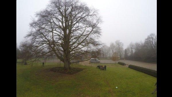 Hethersett school's 300-year-old beech tree must be felled