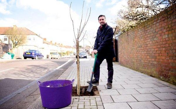Record 20,000 street trees planted across London