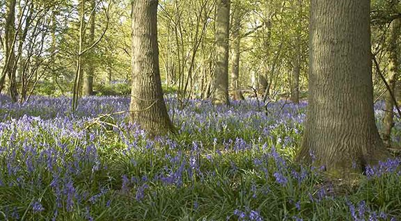 Woodland Trust increases supply chain transparency in boost for UK trees