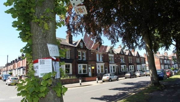 'Still room for compromise' over Sheffield trees debate