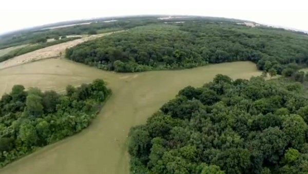 VIDEO: Tree disease is having dramatic effect on landscape