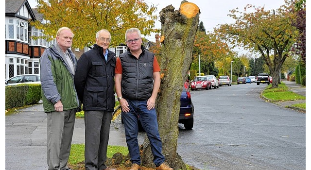 East Riding Council chop down cherry trees without warning