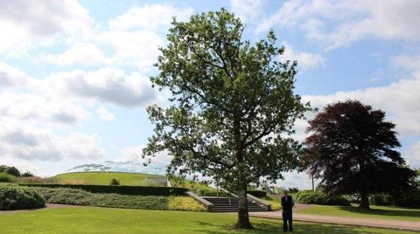 Llanarthne oak wins Wales Tree of the Year award