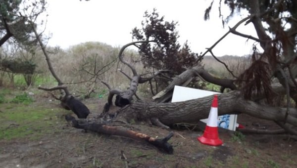 Anger after trees are torched at nature reserve