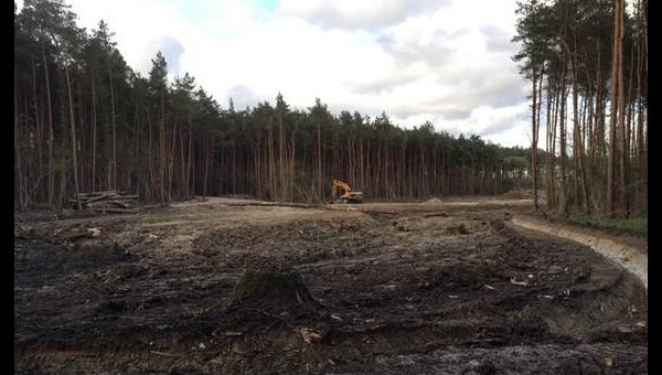 A Wealthy Landowner Who Illegally Cut Down Hundreds Of Trees In The South Downs Is Being Forced To Replant Them