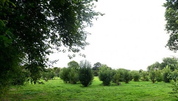 Re-planting of 'Donkey Field' in Fetcham approved three years after illegal logging