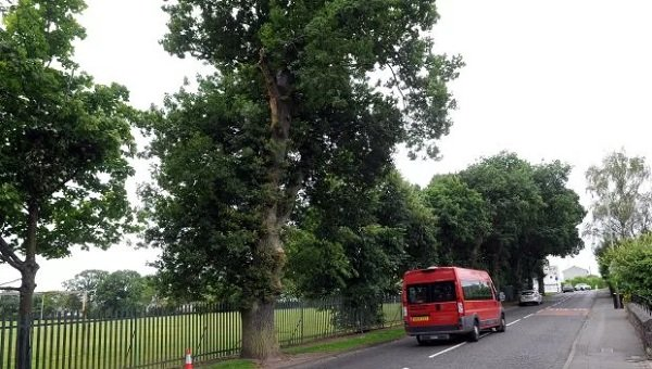 Perth tree danger to be examined