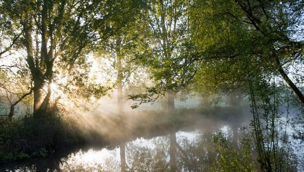 Why we need to keep rivers cool with riverside tree planting
