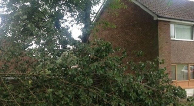 Trees to be assessed on Scunthorpe road after branch hits house