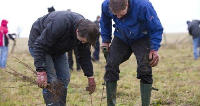 Premier plans to plant 5,000 trees
