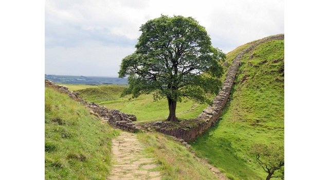 Voting to open for European Tree of the year 2017