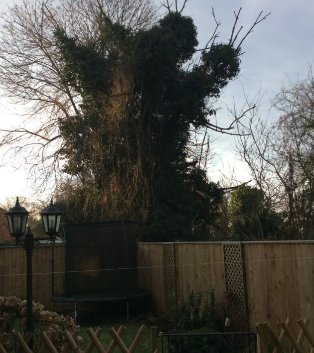 Rotten tree in Elm still standing as residents struggle to trace owners