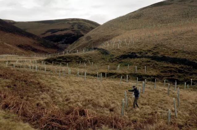 100,000 saplings being planted in the peak district