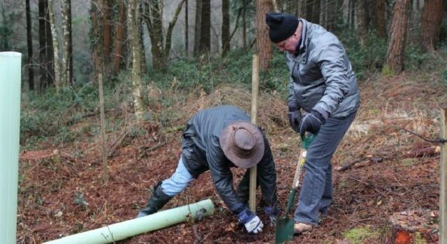 1,000 new trees planted for Premier Paper Group planting day