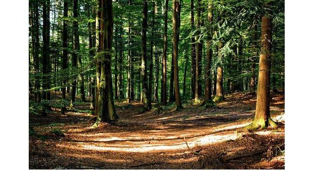 forestry bill