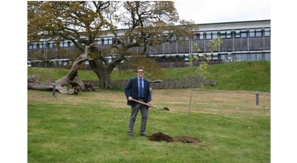 A Rare Variety Of Oak Tree Is The Newest Addition To The Gardens At The  University Of Exeteru0027s Penryn Campus.