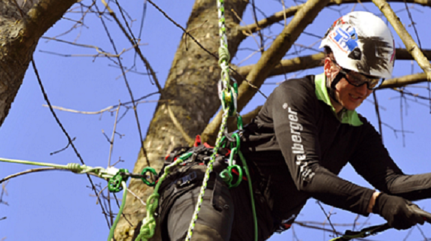 The Evolution of the Arborists Climbing Harness