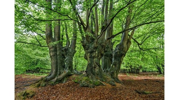 Ancient Tree Forum summer conference – book now