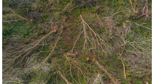 Protected trees in Pembrokeshire illegally felled
