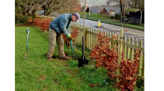 Sidmouth Arboretum to improve local area with trees