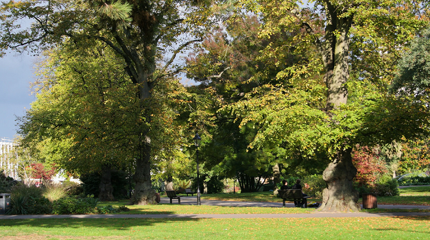 Trees provide £1.29m worth of benefits a year in Southampton