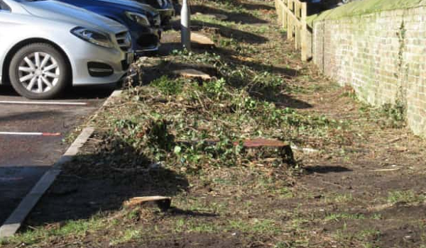 Environmental organisation raise concerns over tree felling in Northumberland