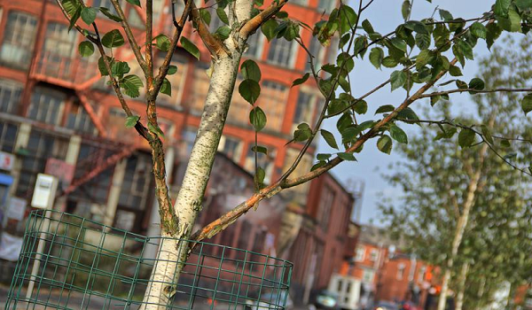 'Securing our urban forests of the future' to be held on Wednesday 2 May