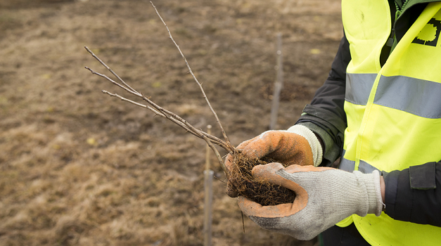 'Big Tree Count' campaign to encourage people to share their planting success
