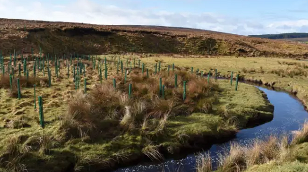 Over 2,500 native trees planted in Derry