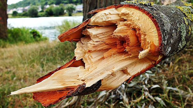 Assessing the need for tree removal: top 10 tips