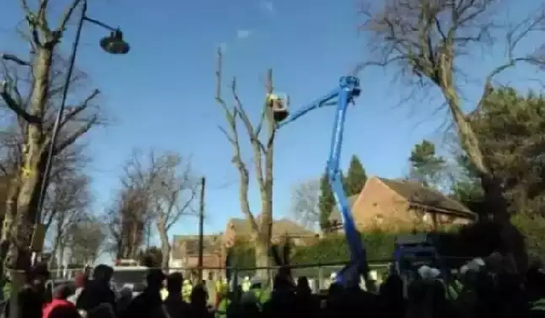 Sheffield Council pay £700,000 in compensation over delays to tree-felling
