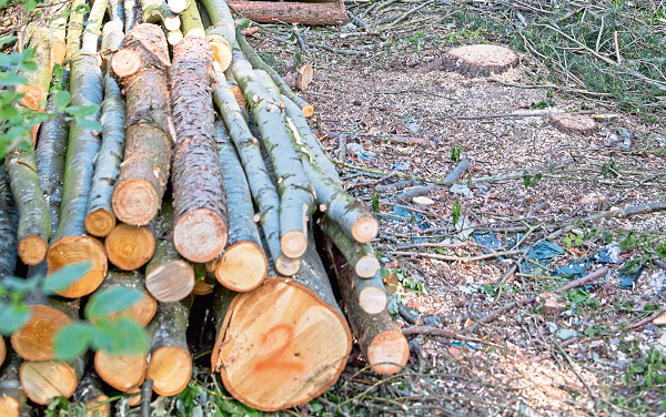 More than 1,500 trees unlawfully felled in Dundee