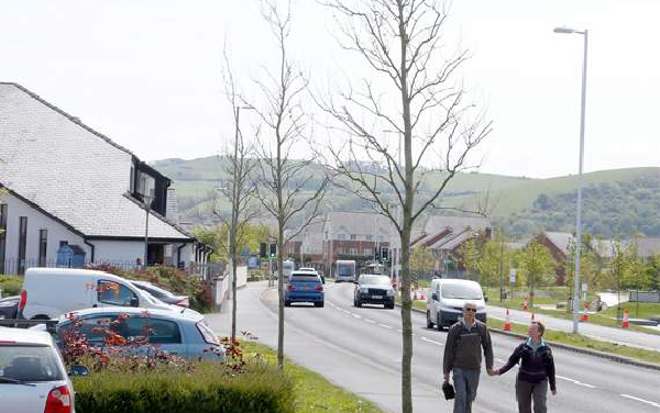 Council monitoring £375k trees that are failing to thrive