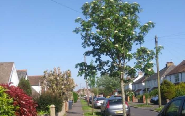 Tree project for Shoreham launches