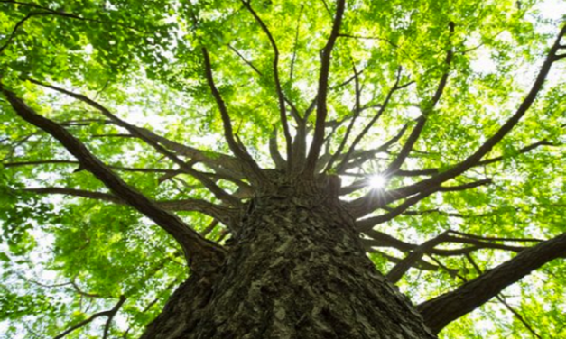 Burton has fewest trees in county due to 'brewing past'