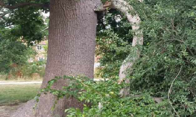Developers urged to act over dangerous trees