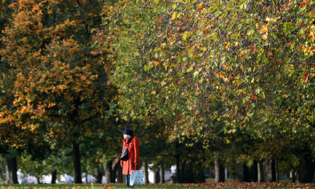 These 15 global cities have the most trees